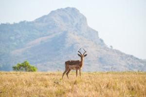 Colis au Swaziland, envoyer un colis avec Packlink